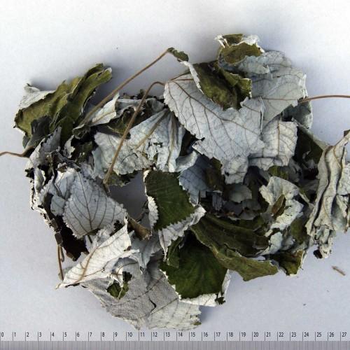 Pflanzenfarbstoff Ramieblätter Produkt